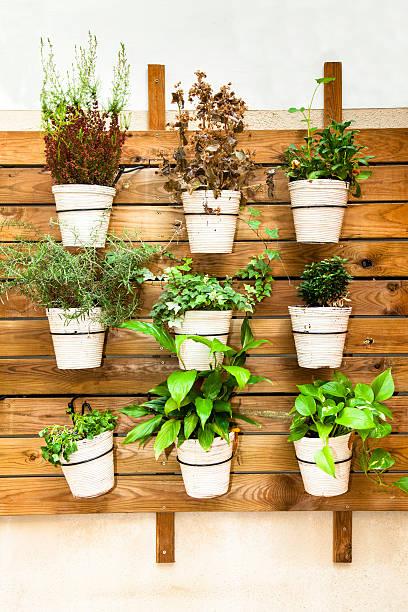 pflanzen in töpfen wand mount - paletten terrasse stock-fotos und bilder