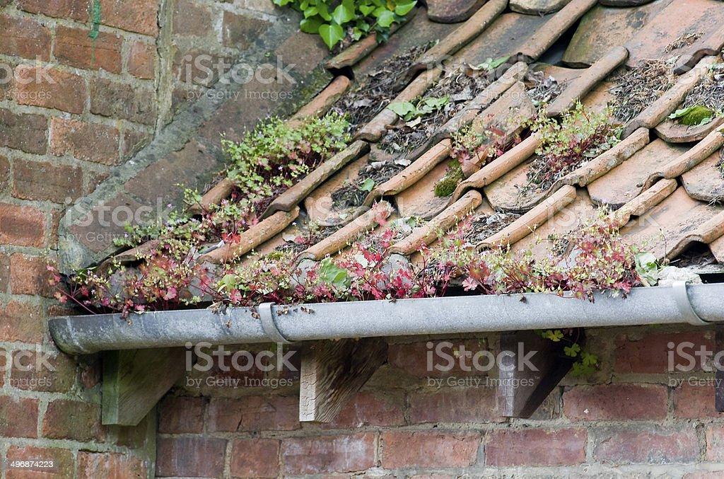 Pflanzen in Dachrinne – Foto