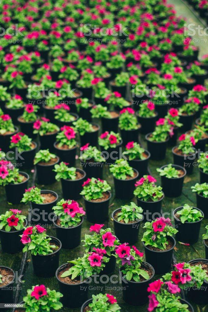 Plants in rows photo libre de droits