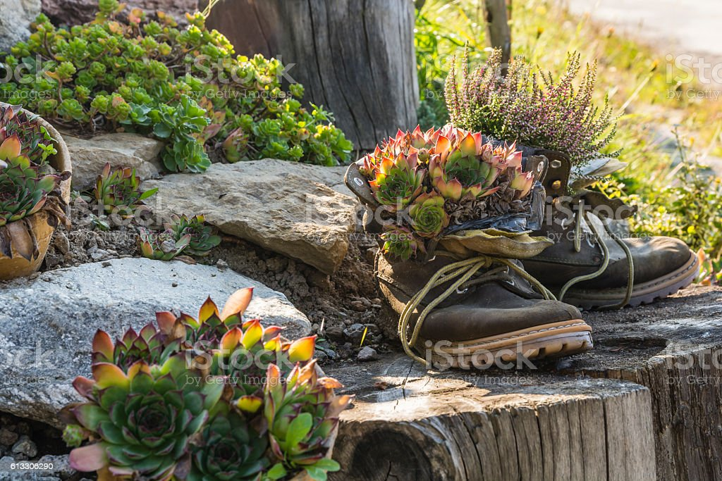 Plants in shoes. stock photo