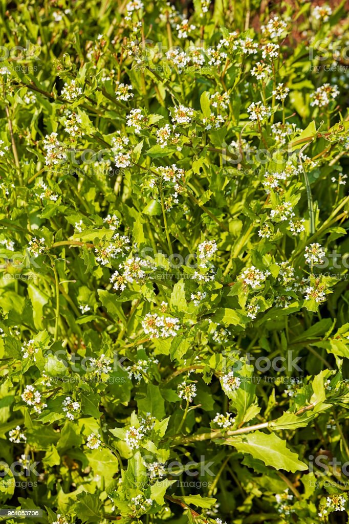 plants in the field - Royalty-free Agricultural Field Stock Photo