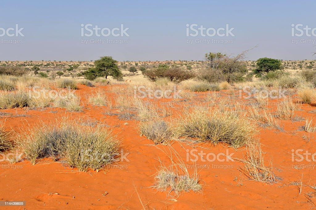 Plants in the Kalahari Desert royalty-free stock photo