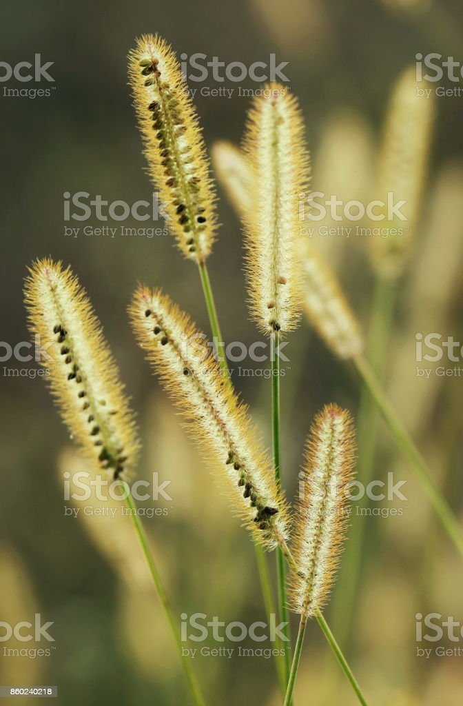 Plants in the morning stock photo