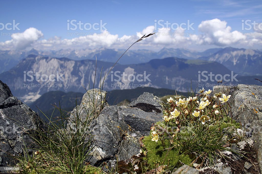 Plants in the mountains stock photo