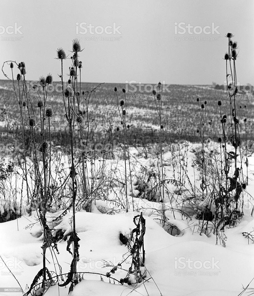 Piante nella stagione invernale foto stock royalty-free