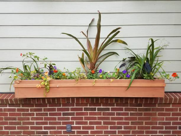 plants in wood flower pot or box with house siding and brick wall stock photo