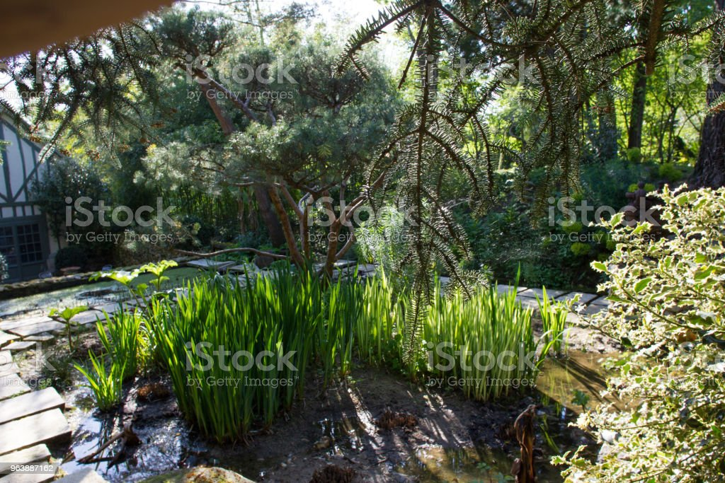 Plants loving water - Royalty-free Antique Stock Photo