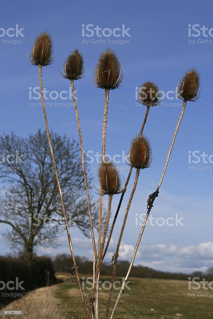 plants on blue royalty-free stock photo