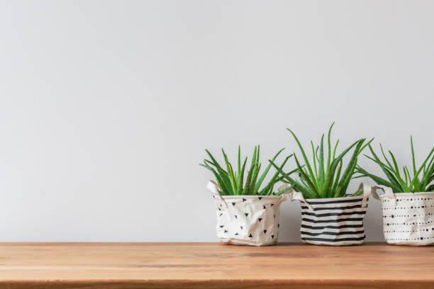 Plants on empty wall picture id960079164?b=1&k=6&m=960079164&s=612x612&w=0&h=y2vuu1fhdiyqihxolk9wwmi4gu32kohy0cjyc0cldcg=