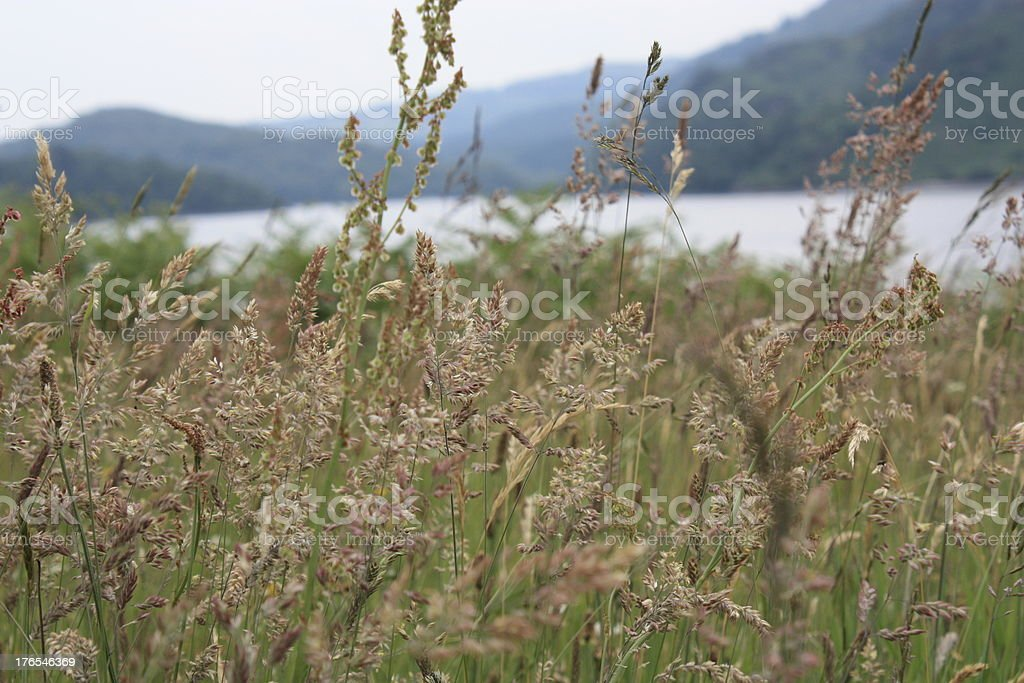 Plants on Lochside royalty-free stock photo