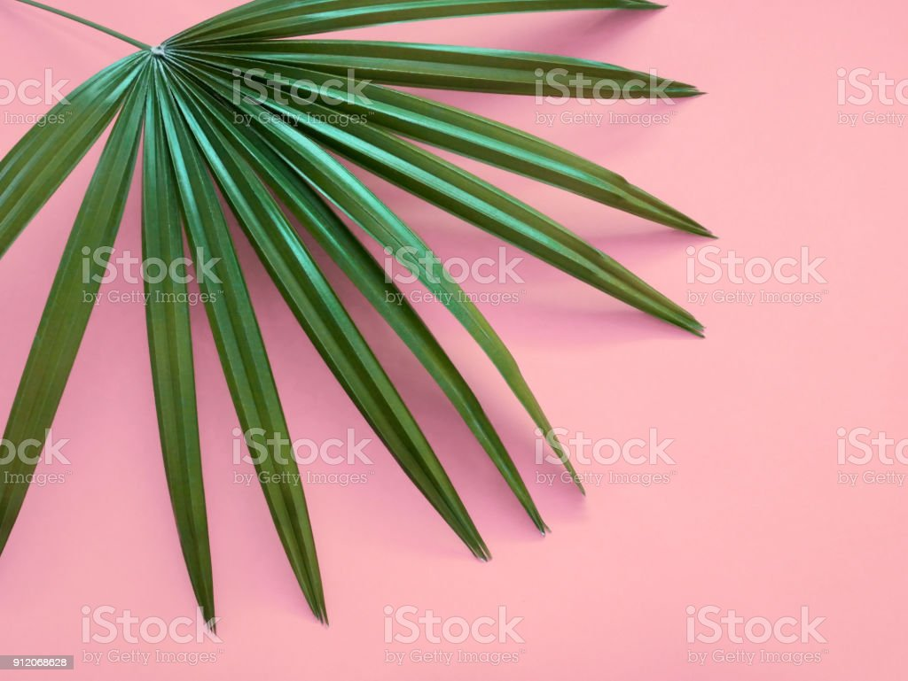 Plants on pink. stock photo