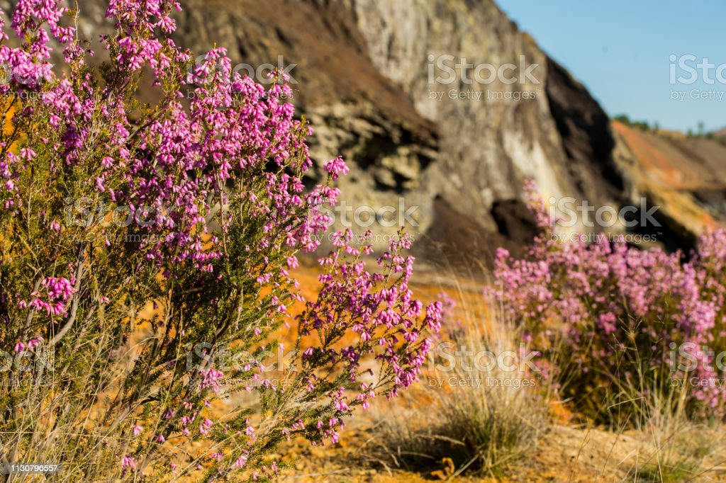 plants on the red rocks of Rio Tinto