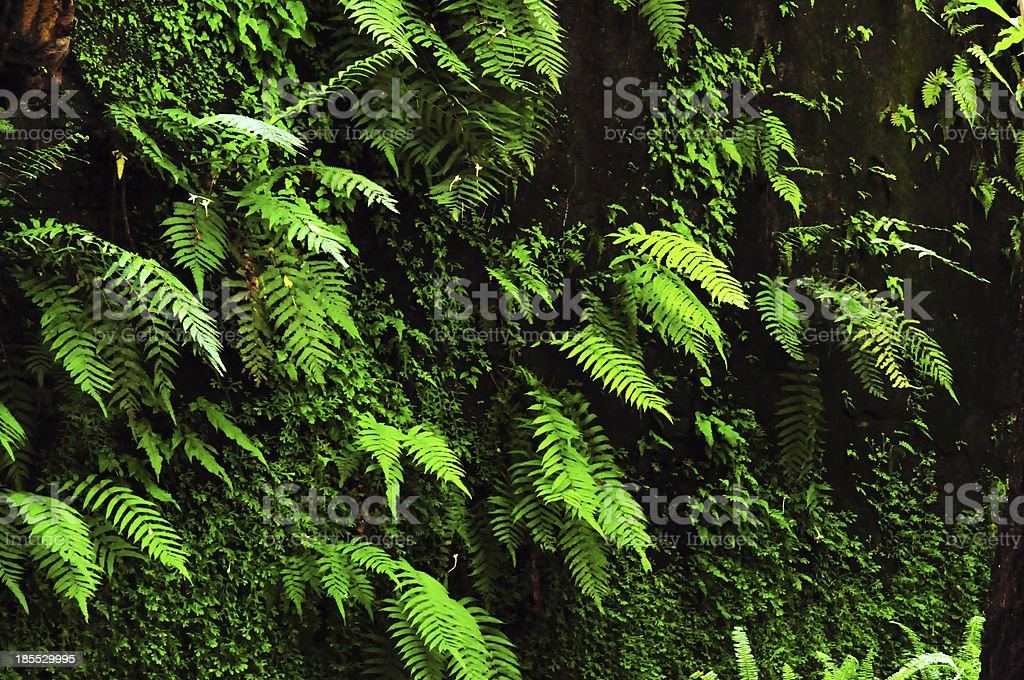 plants on the wall royalty-free stock photo