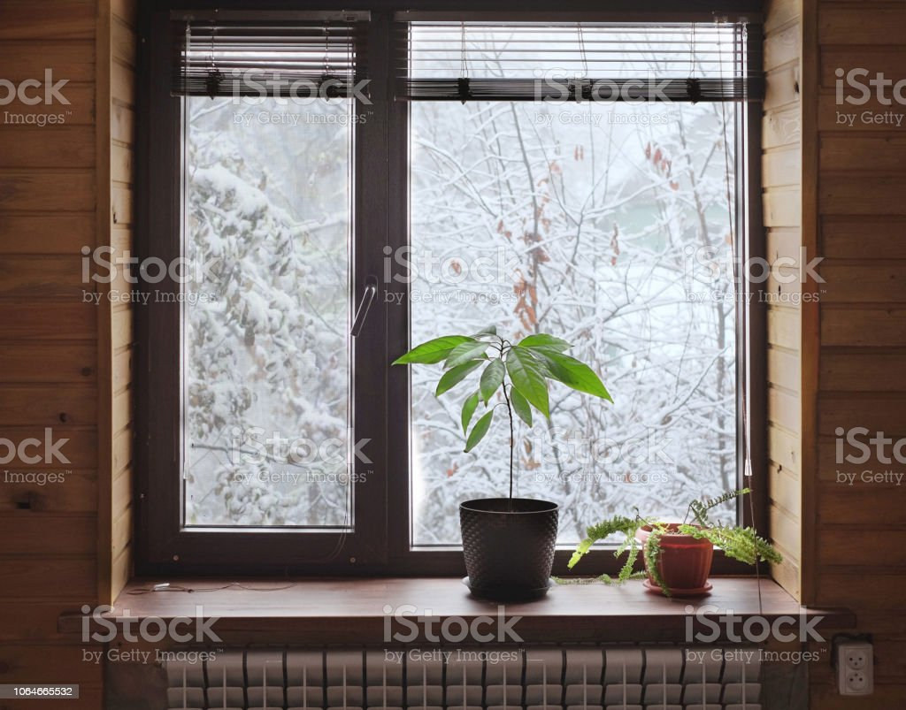 plants on the window sill and winter landscape outside the window.