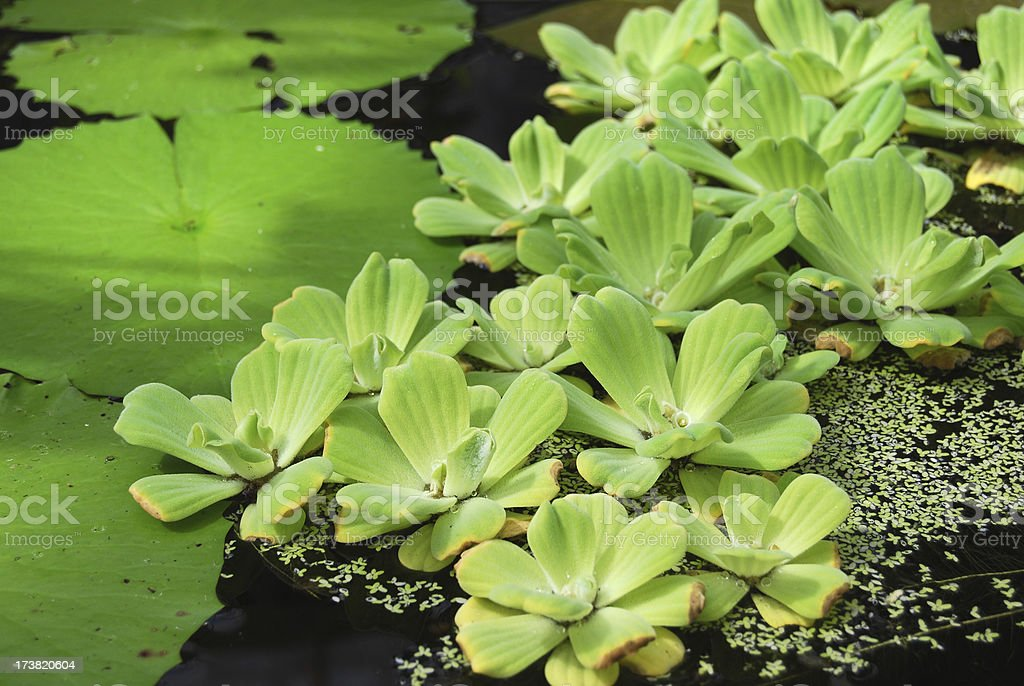 Plants on water stock photo