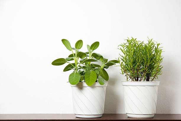 plants on white stock photo