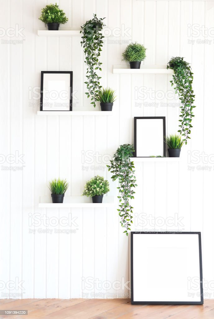 Plants on white shelves on white wall in the room stock photo