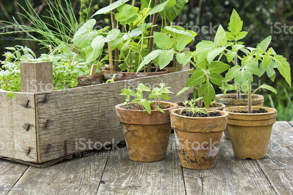 Pflanzen – Foto