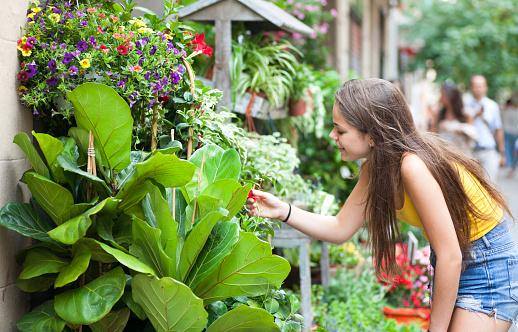 Plants store