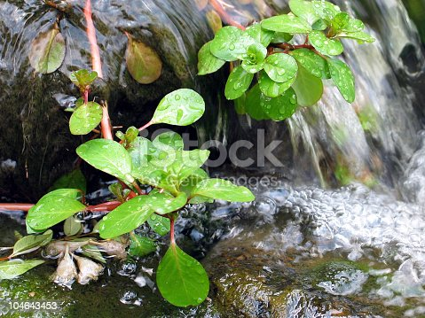 Close up low perspective of plants growing in a fast moving stream.