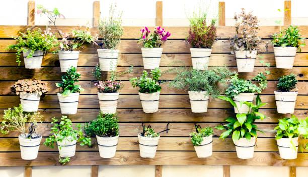 variation der pflanzen in töpfen wandhalterung - paletten terrasse stock-fotos und bilder