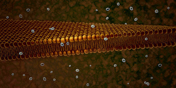 Plasma Membrane Of A Cell stock photo
