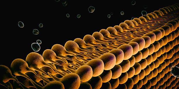 Plasma Membrane Of  Cell Plasma Membrane Of  Cell With other molecules, 3d render lipid stock pictures, royalty-free photos & images