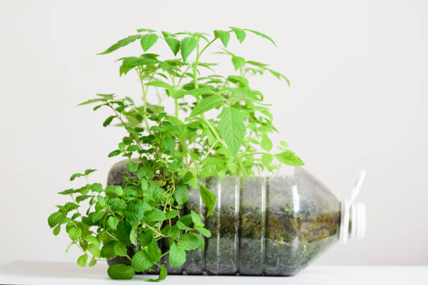 Plasstic bottles water DIY for planting vegetables plant stock photo
