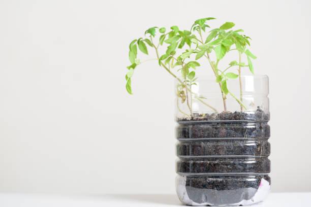 Plasstic Flaschen Wasser DIY für die Pflanzung Gemüse Pflanze – Foto