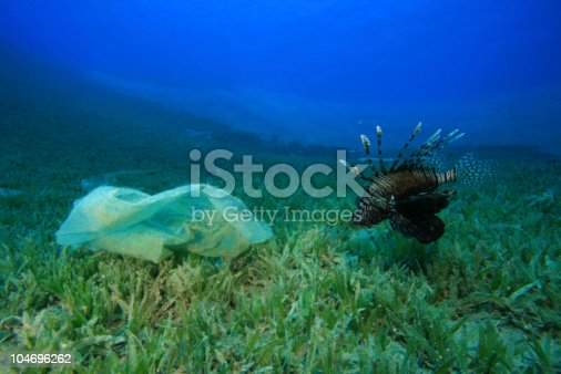 Environmental problem - a plastic bag litters a reef, beside a Lionfish
