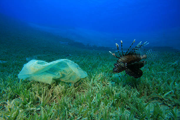 plastic bag and lionfish - lionfish stock photos and pictures
