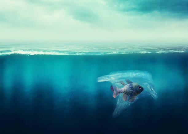 Plastiktüte mit einem Fisch im Ozean – Foto