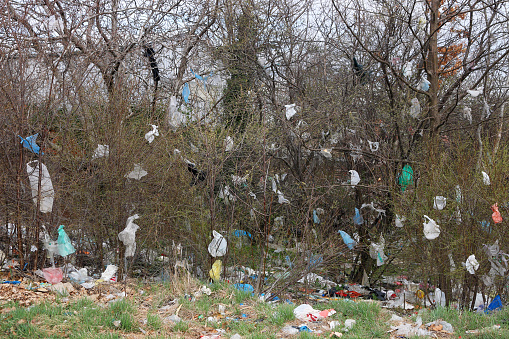 plastic bags on the branches of trees and ground environmental pollution