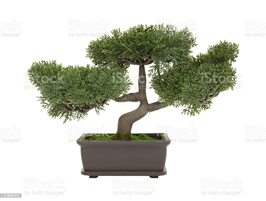 Plastic Bonsai Tree Isolated On A White Background Stock Photo Download Image Now Istock