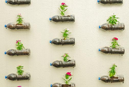 Plastic bottle of flowers