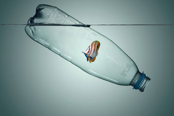 plastic bottle with fish, pollution that floats in the ocean - ocean plastic stock pictures, royalty-free photos & images