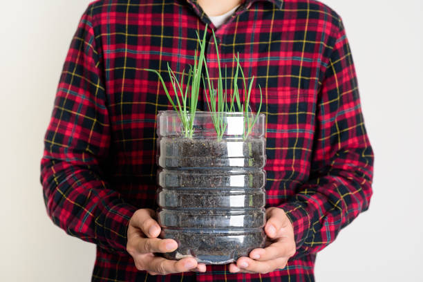 Plastic bottles water DIY for planting vegetables plant stock photo