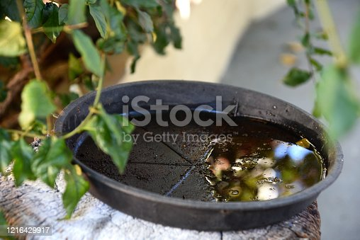 plastic bowl abandoned in a vase with stagnant water inside. close up view. mosquitoes in potential breeding ground.