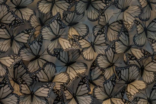 Plastic butterfly through the glass of showcase picture id538994114?b=1&k=6&m=538994114&s=612x612&w=0&h=359hay8zoo0jm9cmdzbhos5cu6kkvngjstfzl1clv8m=