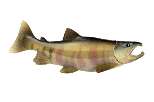Painted plastic fish in isolated white background. Clipping path included.