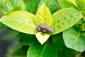 緑の植物上のプラスチックのカエル