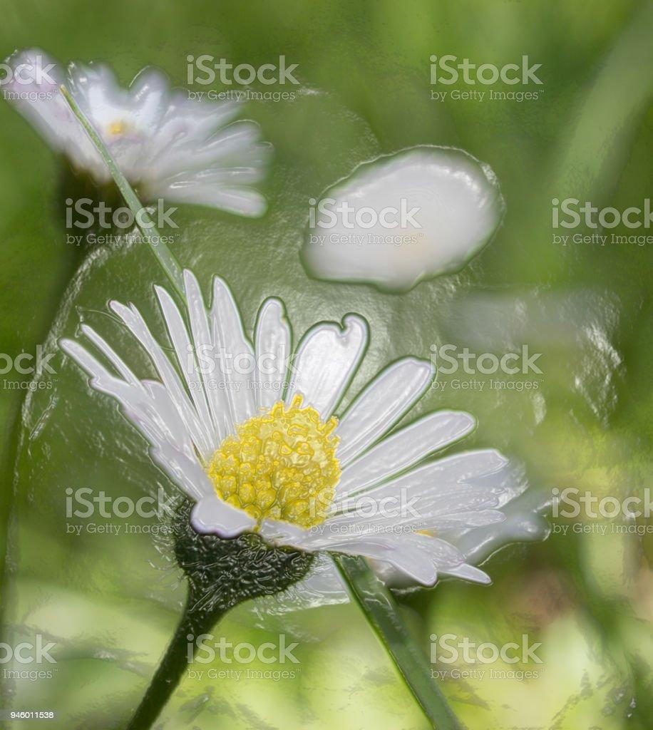 Plastic Image Of Closeup Of Beautiful White Daisy Flowers Stock