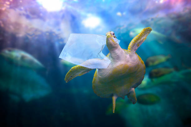 plast havssköldpadda äter plastpåsar under det blå havet. miljö vårds koncept och inte kasta sopor i havet - animal doodle bildbanksfoton och bilder