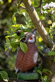 Plastic owl in a tree
