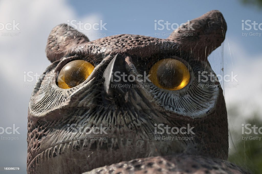Plastic owl with spider web royalty-free stock photo