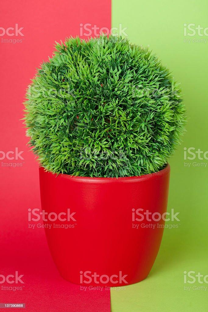Kunststoff Pflanze in Grün und Rot – Foto