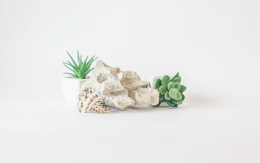 Plastic plants rock and seashell - minimalistic interior details