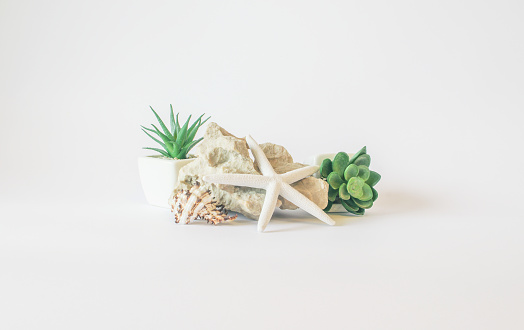 Plastic plants rock sea star and seashell - minimalistic interior details