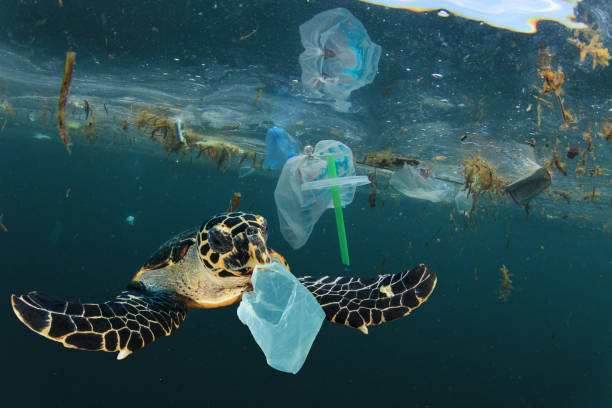 Plastic pollution and Sea Turtle underwater Environmental issue of plastic pollution problem. Sea Turtles can eat plastic bags mistaking them for jellyfish plastic pollution stock pictures, royalty-free photos & images