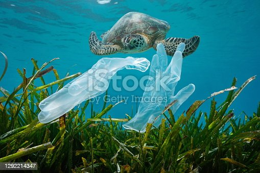 istock Plastic pollution disposable gloves and sea turtle 1292214347